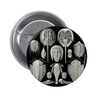 ¡Trilobite Pin