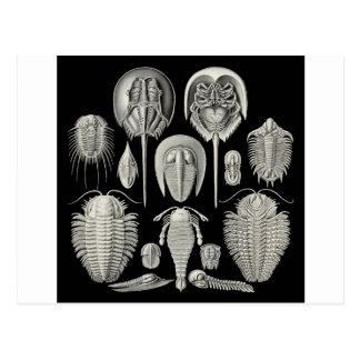 Trilobite! Post Cards