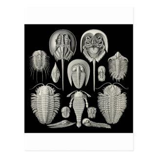 ¡Trilobite! Tarjetas Postales