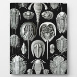 Trilobites and Fossils in Black and White Plaque