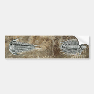 Trilobites Bumper Sticker