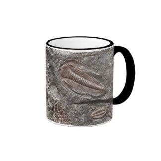 Trilobites fósil: Taza de los FÓSILES de TRILOBITE
