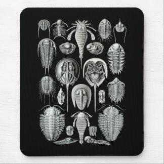Trilobites y escorpiones de mar alfombrillas de raton