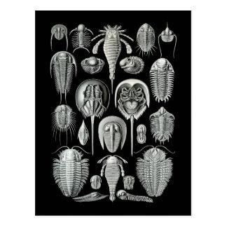 Trilobites y escorpiones de mar postal