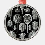 Trilobites y fósiles en blanco y negro adorno de reyes