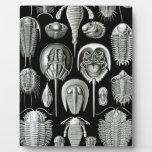 Trilobites y fósiles en blanco y negro placas de madera