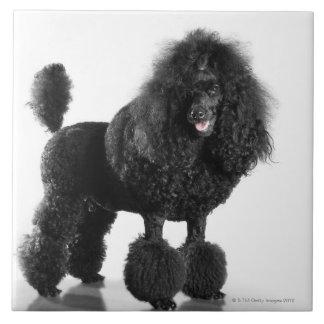 Trimmed black poodle ceramic tile