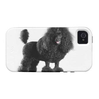 Trimmed black poodle iPhone 4 cases
