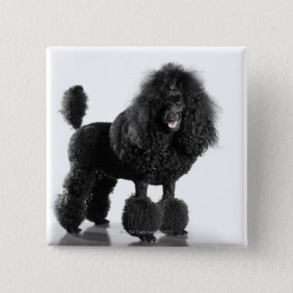 Trimmed black poodle pinback button