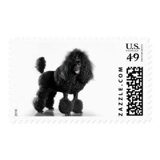 Trimmed black Poodle Postage Stamp