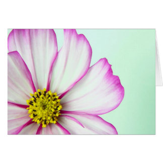 Trimmed in Pink Card