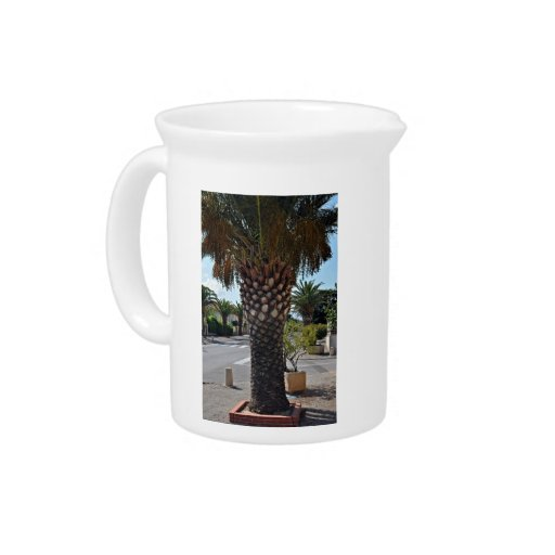 Trimmed palm tree close up drink pitcher