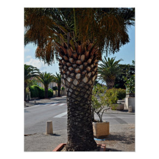Trimmed palm tree close up print