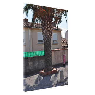 Trimmed Phoenix palm tree Gallery Wrapped Canvas
