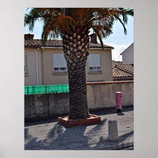 Trimmed Phoenix palm tree Print