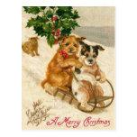 Trineo del perro del navidad postal