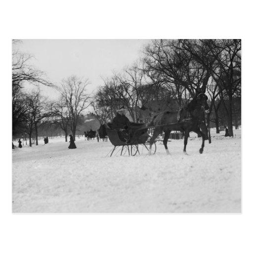 Trineo traído por caballo en Central Park, New Tarjetas Postales