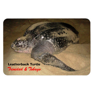 Trinidad and Tobago Leather-Back Turtle Rectangular Photo Magnet