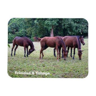Trinidad and Tobago Ortinola Estate Horses Rectangular Photo Magnet