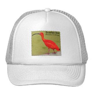 Trinidad and Tobago Scarlet Ibis Trucker Hat