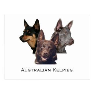 Trío australiano de los kelpies postal