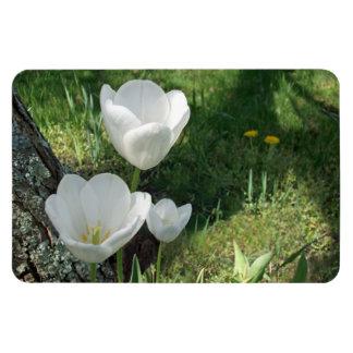 Trío blanco de la flor de los tulipanes imanes flexibles