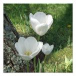 Trío blanco de la flor de los tulipanes arte con fotos