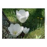 Trío blanco de la flor de los tulipanes felicitaciones