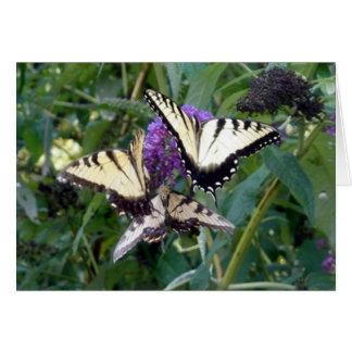 trio butterflys card