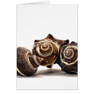 Trio Card