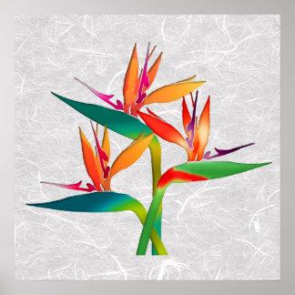 Trío de aves del paraíso póster