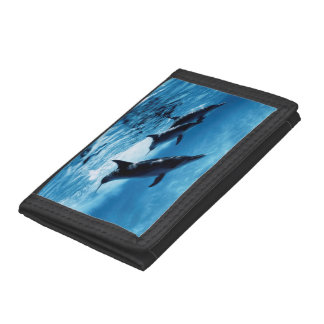 Trío de delfínes