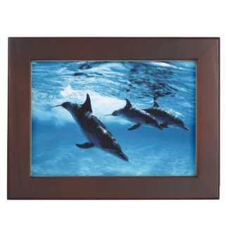 Trío de delfínes caja de recuerdos