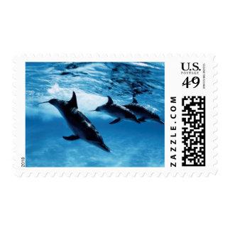 Trío de delfínes estampillas