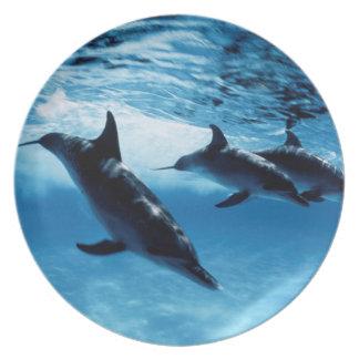Trío de delfínes platos de comidas
