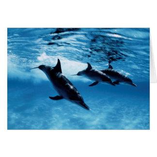 Trío de delfínes tarjeta de felicitación