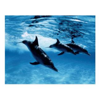 Trío de delfínes tarjetas postales