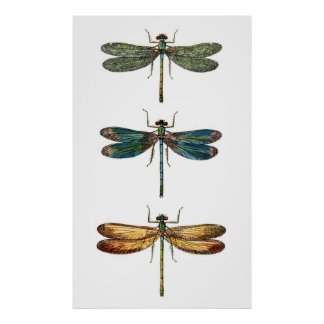 Trío de la libélula póster