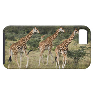 Trío de las jirafas de Rothschild, lago Nakuru iPhone 5 Fundas