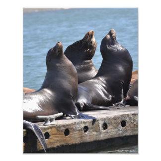 Trío de los leones marinos que toman el sol en el fotografías
