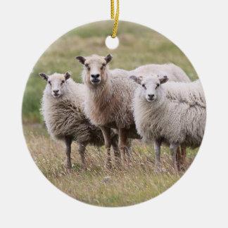 Trío de ovejas en Islandia Adorno Navideño Redondo De Cerámica