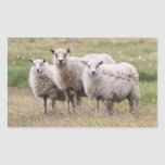 Trío de ovejas en Islandia Etiqueta