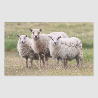 Trío de ovejas en Islandia Pegatina Rectangular