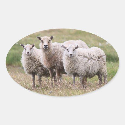 Trío de ovejas en Islandia Pegatina Ovalada