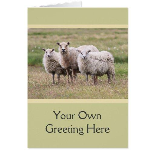 Trío de ovejas en Islandia Tarjetón