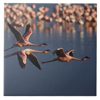 Trío de pocos flamencos en vuelo, lago Nakuru Azulejo Cuadrado Grande