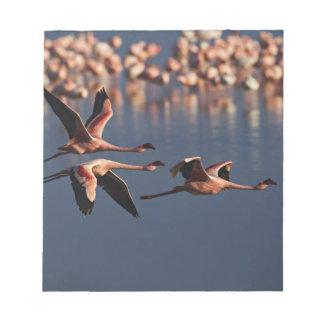 Trío de pocos flamencos en vuelo, lago Nakuru Blocs