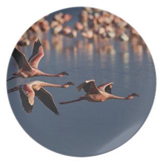 Trío de pocos flamencos en vuelo, lago Nakuru Platos Para Fiestas