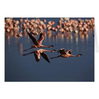 Trío de pocos flamencos en vuelo, lago Nakuru Tarjeta De Felicitación