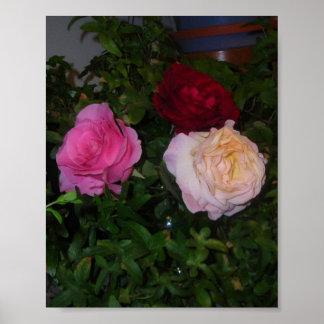 Trío de rosas posters